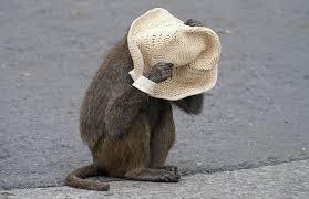 mono tapa sombrero png