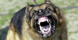 aggression-dog