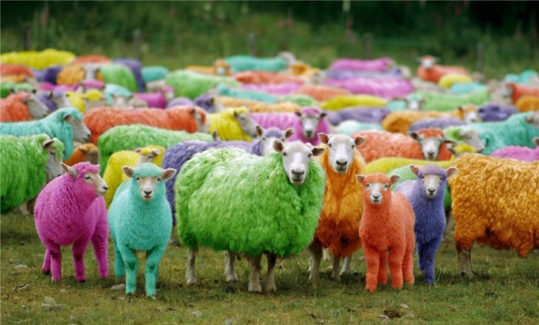 colour-blind-test-x-rite-sheep