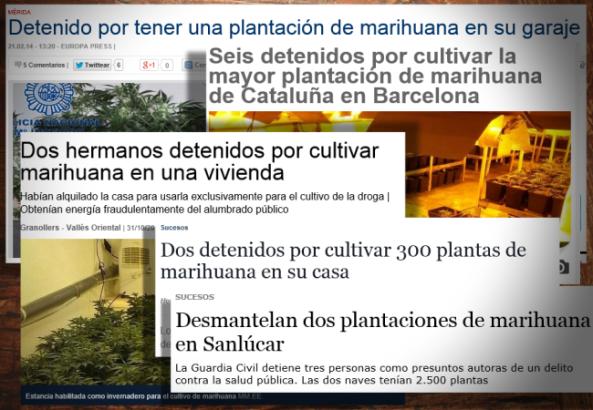 montaje plantas marihuana_00000