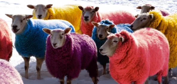 ovejas colores nieve