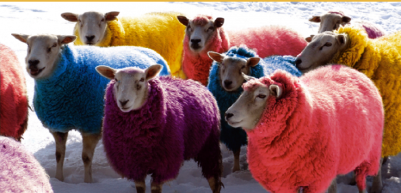 Coloured%20sheep