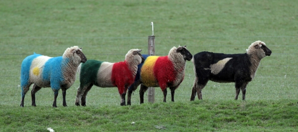 World Cup Sheep IRB RWC 2011