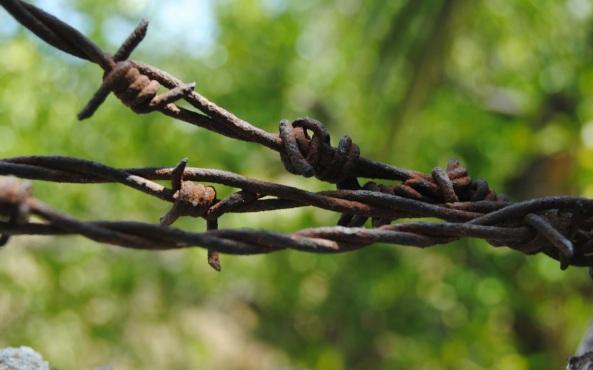 alambrada naturaleza