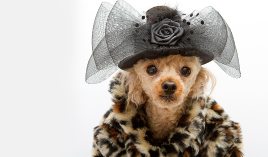 Luxury Dog coats online
