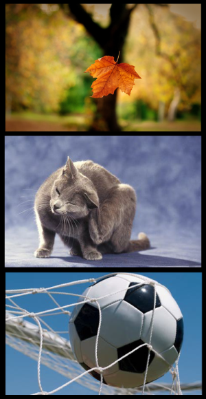 hoja gato balon_00000_00000