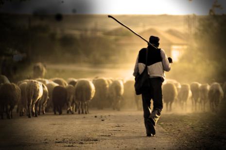 pastor ovejas 3_00000
