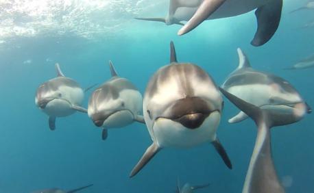 delfines-gopro4