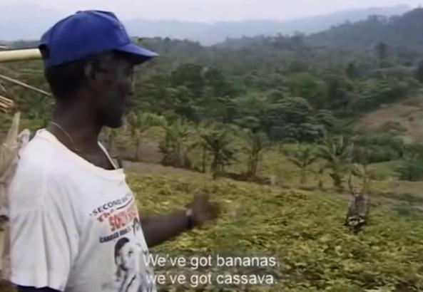 Plantaciones de los revolucionarios de Bougainville