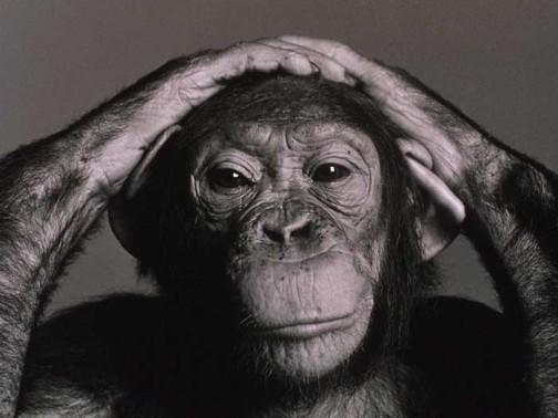 chimp1