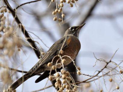 bird-in-tree_18365_990x742