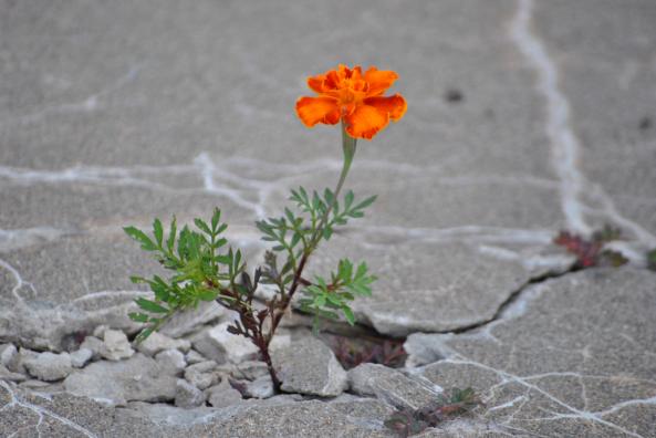 flower concreteç