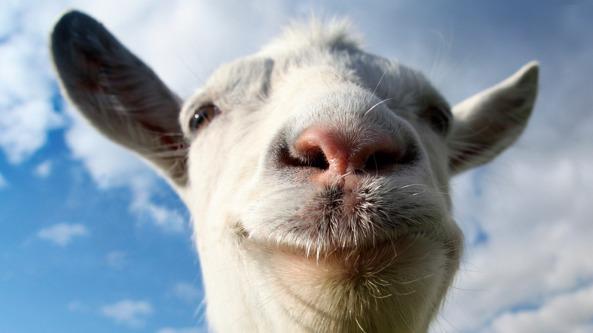 goats - UN MUNDO DEMENCIAL