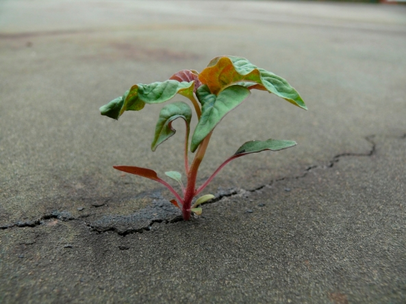 victory-sprout-concrete