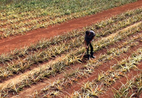 17 de Mayo, día del campesino. Foto: Ismael Francisco/Cubadebate.