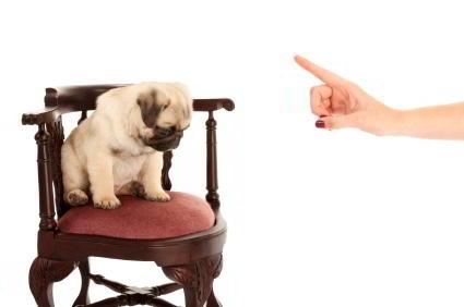como-no-castigar-perro