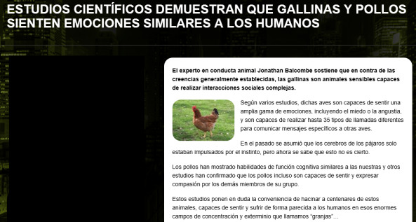 captura gallinas