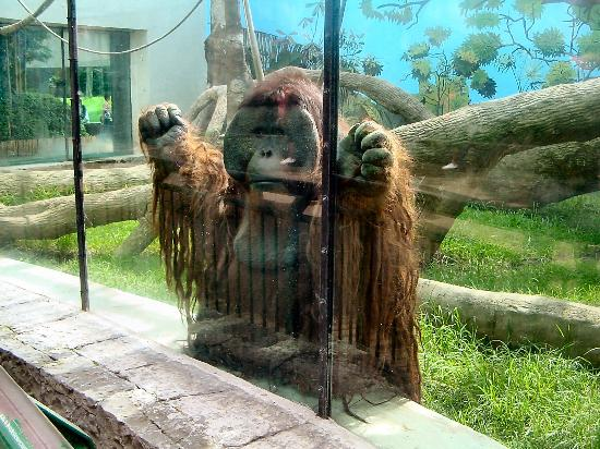 parque-zoologico-de-chapultepe