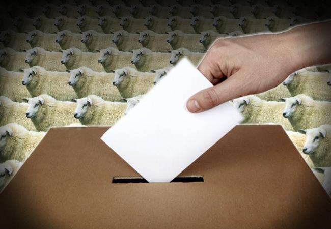 elecciones en el pais de los borregos_00000